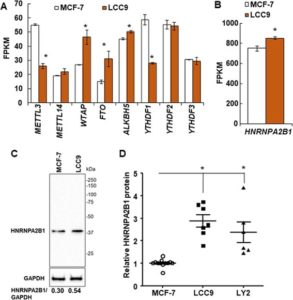 HNRNPA2/B1 is upregulated in endocrine-resistant LCC9 breast cancer cells and alters the miRNA transcriptome when overexpressed in MCF-7 cells