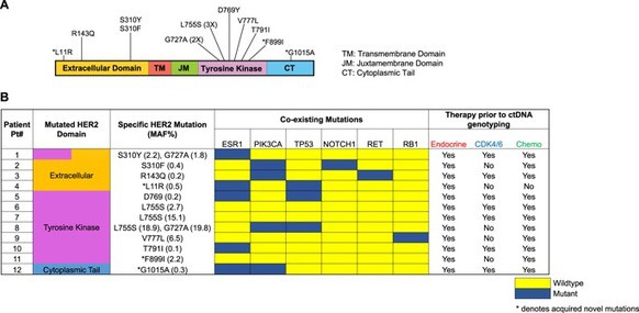 Blood-based monitoring identifies acquired and targetable driver HER2 mutations in endocrine-resistant metastatic breast cancer