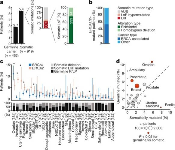 Tumour lineage shapes BRCA-mediated phenotypes
